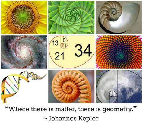 number pattern in nature fibonacci sequence mommacommaphd
