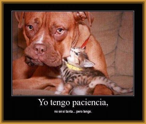 imagenes bonitas y graciosas fotos graciosas de perros imagenes divertidas de gatos y