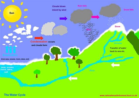 diagram of water cycle for diagram of water cycle diagram site