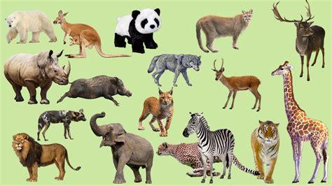 hewan suara  anak anak suara binatang buas gajah