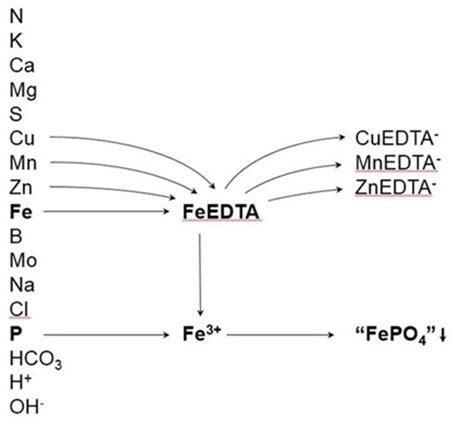 tin pourbaix diagram oxygen phase diagram oxygen free engine image for user