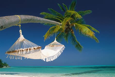 tropical pictures hammock wallpaper mobile