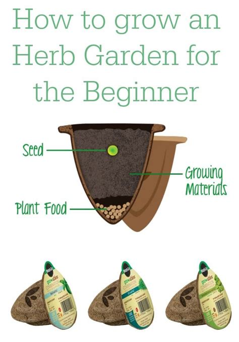 how to grow herbs how to grow an herb garden