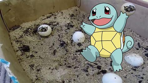 gabbia per tartarughe di terra baby turtle born nascita tartaruga di terra