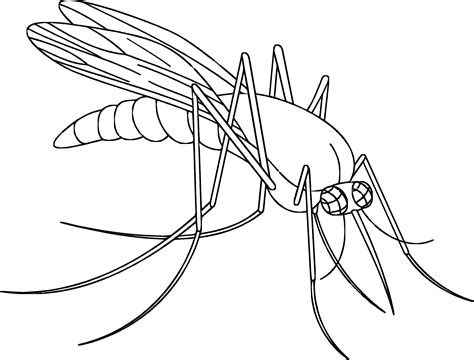 coloring pictures of mosquitos coloring pages