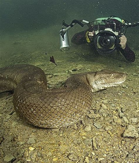 b real snake 485 best images about things that slither on