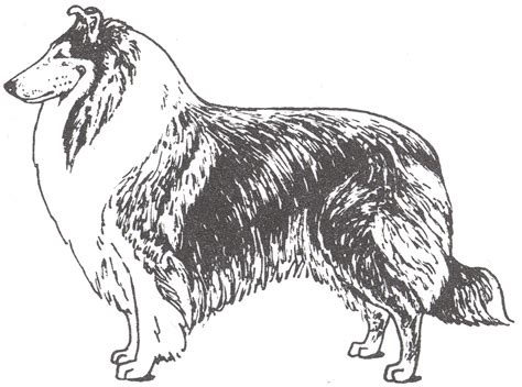 blue heeler coloring pages dog breeds picture