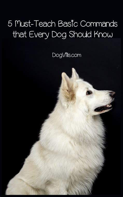 basic puppy commands 5 must teach basic commands that every should dogvills