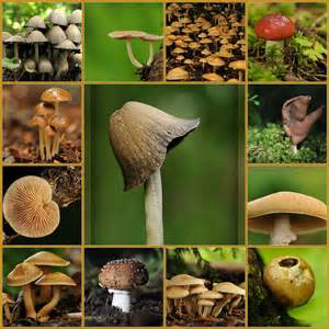 mushrooms types nutritional value sweet additions