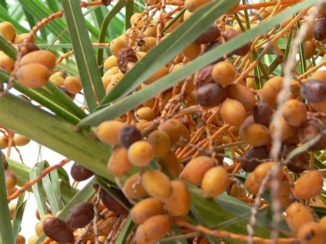 palm tree made of fruit file orange palm tree fruits jpg