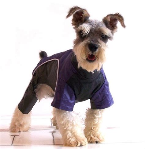 puppy clothes how to buy your lovely charming and healthy clothes wishforpets