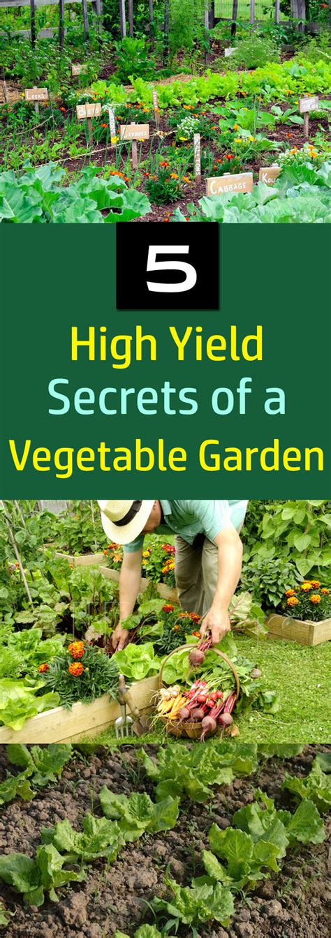 5 Secrets Of A High Yield Gardening Vegetable Gardening Growing Your Own Vegetable Garden