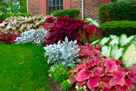 top 5 fall shade perennials gardener and landscape colorful shade plants for landscaping outdoors