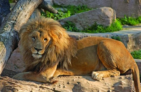 barcelona zoo animals barcelona zoo the ultimate family day out