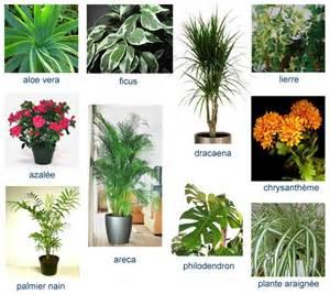 um contempor 226 neo o poder despoluente das plantas nos