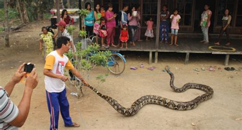 film manusia ular penghuni hutan kebakaran lahan paksa ular raksasa ini keluar sarang