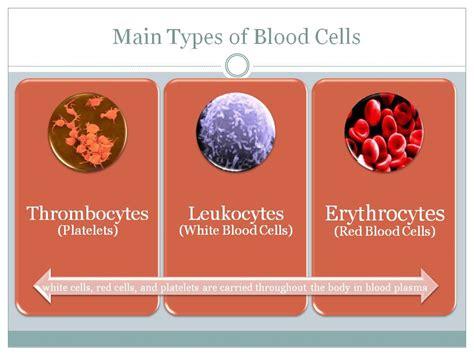 Blood Typr 3 blood cells aren t boring itis