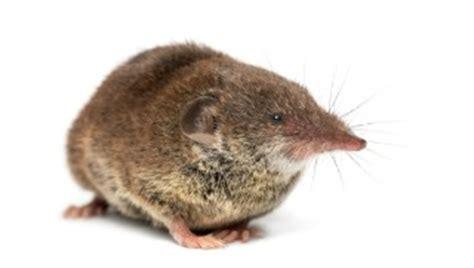 differences between moles, voles & shrews | ehrlich pest