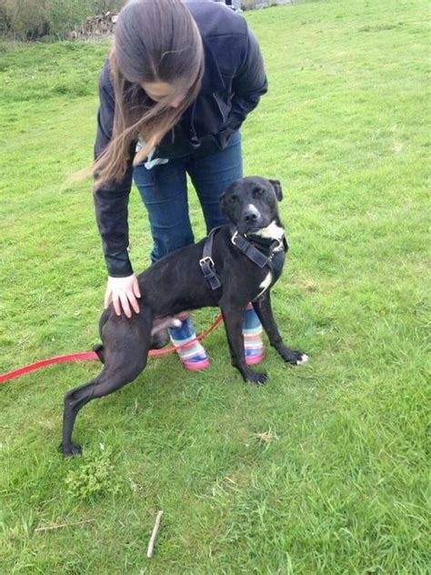 halo rescue halo rescue baxter manningtree essex pets4homes