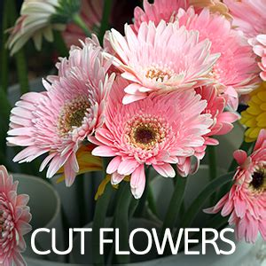 cut flowers food local harvest the sunshine coast food directory