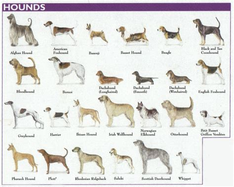 hound dogs breeds the 7 breed groups explained hound breeds warm