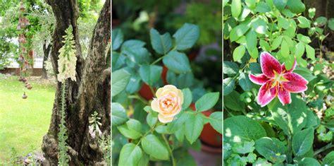 giardino d estate giardino d estate anche in vaso il giardino di veca