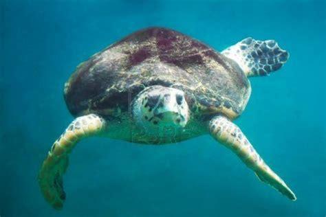 animales animales animales marinos en peligro de extincion 43431 vcstar