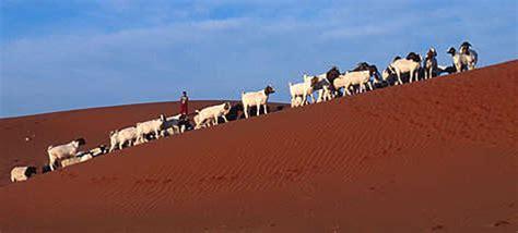 kalahari desert   wwf