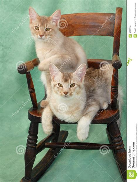 Cat On The Chair by Cats On Rocking Chair Royalty Free Stock Image Image