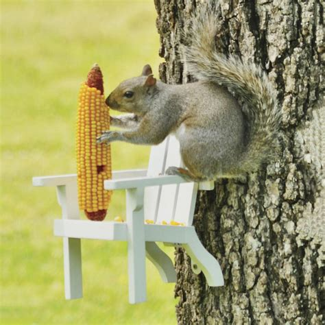 Wooden Furniture For Kitchen Adirondack Chair Squirrel Feeder The Green Head