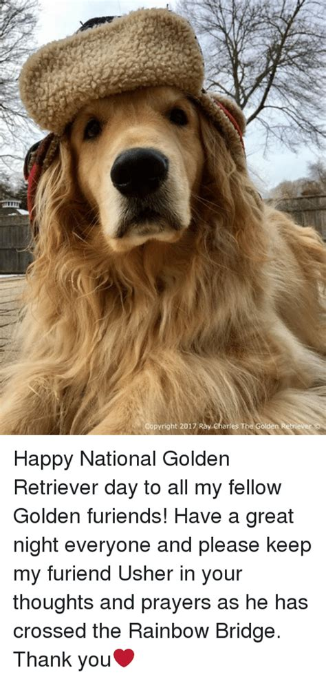 national golden retriever day 25 best memes about the rainbow bridge the rainbow bridge memes