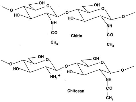 Chitin Chitosan patent ep1701980a1 a simplified method to retrieve