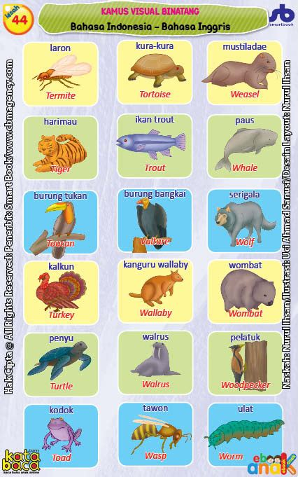 Mengenal Lingkungan Dan Hewan 3 Bahasa Seri Kamus Bergambar kamus visual binatang bergambar dua bahasa indonesia inggris 11 ebook anak