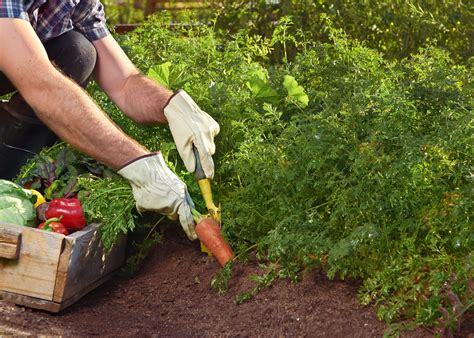 how to grow a vegetable garden how to grow a vegetable