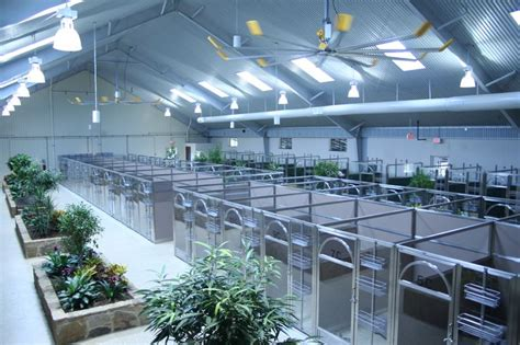 boarding facilities pin by direct animal products on boarding facilities daycare