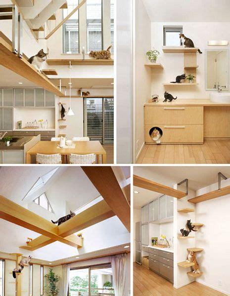 decorando una casa apta para gatos