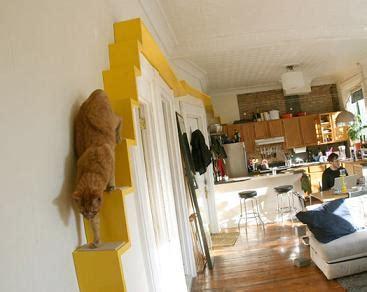 build  indoor cat highway