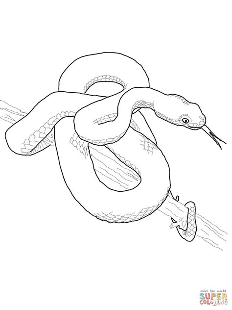 cottonmouth snake coloring page viper snake coloring page sketch coloring page