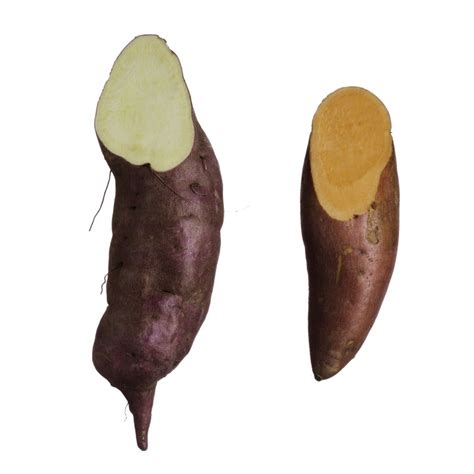 what color are sweet potatoes yes white sweet potatoes exist here s what they are