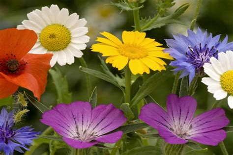 imagenes de flores variadas unas bonitas flores variadas 39994