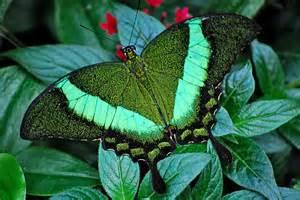 panoramio photo of jardins des papillons