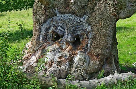 owl tree organon pareidolia