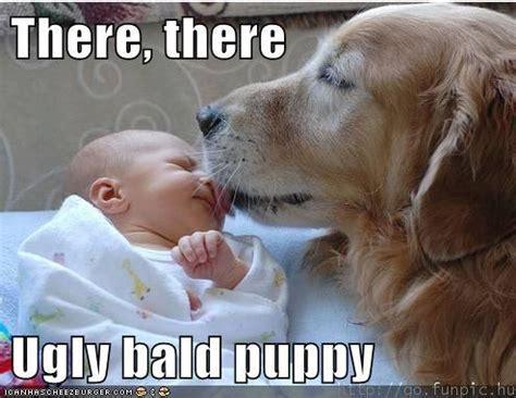 Dog Laughing Meme - favorite dog memes or make me laugh during hurricane sandy