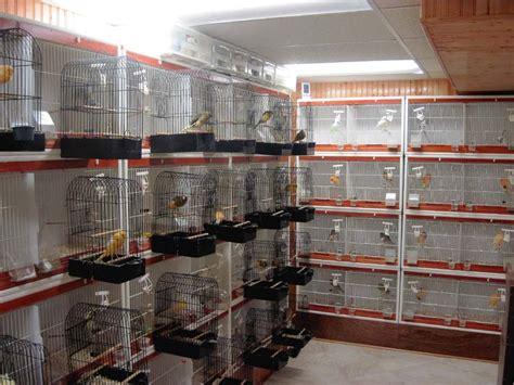 bird room yorkshires chion breeder exhibitor the bird room