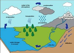 evaporation is the first process in the water cycle. evap...
