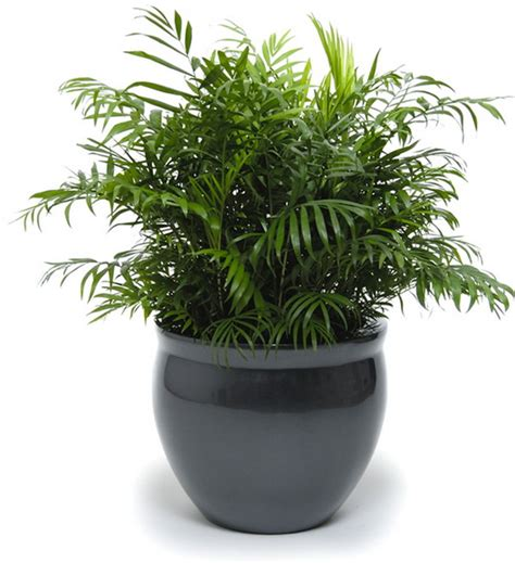 indoor plant pot indoor plant pots designs and styles to pick tips and