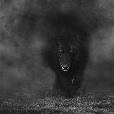 wolf shadow photography artwork collections