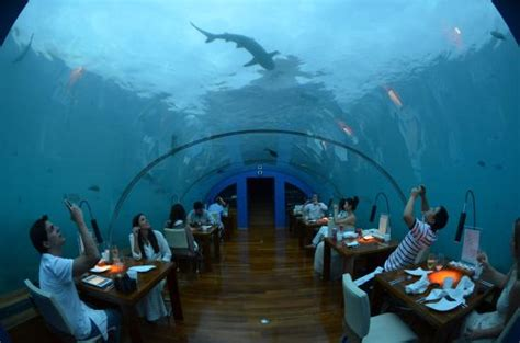 ithaa undersea restaurant prices ithaa underwater restaurant picture of conrad maldives