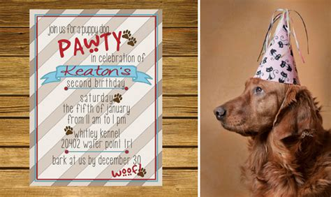 Birthday Surprises For Your Pet by Playful Themes For Your Pup S Birthday