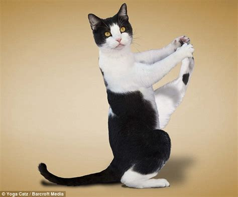 cat yoga wallpaper the purrfect workout yoga loving cats are a christmas